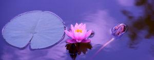 Soin Eskalia-soins du corps massage-massage thérapeutique-therapeute massage-soins ayurvédiques